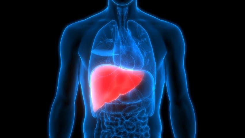 Reproducción gráfica del hígado.