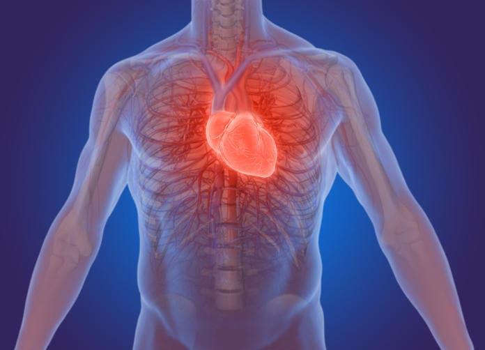 Reconstrucción gráfica de la posición anatómica del corazón.
