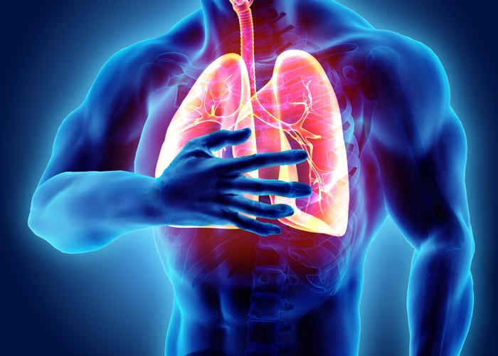 Reconstrucción gráfica de los pulmones, resaltada con respecto al resto del cuerpo